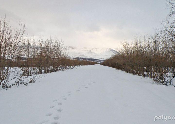 Въезд в Полярный со стороны Харбея