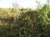 Вид на Пайпудынский хребет