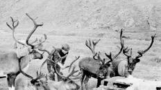Юрик и олени