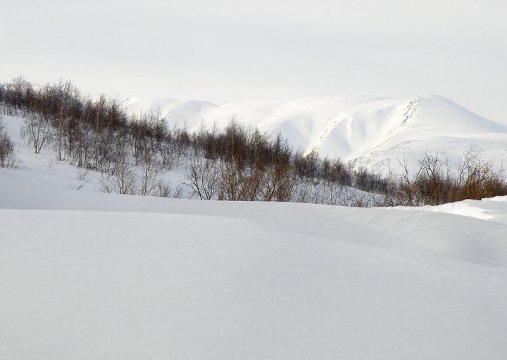 sneg-bez-griazi-2014-poliarnyj-ural