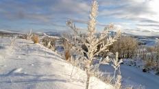 Утренний морозец в верховьях Соби. Полярный 29.10.2011