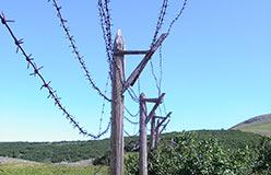 Колючка харбейского лагеря