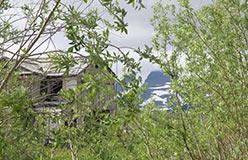 Сквозь ивы на Спортивной скворечник на фоне Пендирмапэ