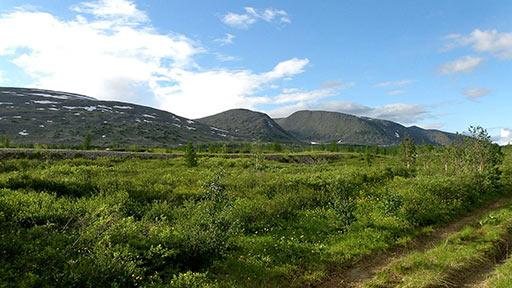 Насыпная и полевая дороги в долине Б.Пайпудыны. Вид на 14-й км