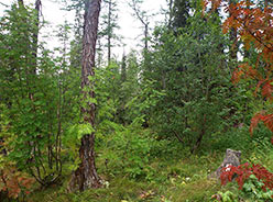 Лес в среднем течении Хараматолоу