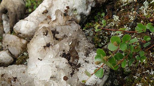 Во мху обломки кварцевой жилы с кристаллами хрусталя
